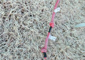 used-kite06